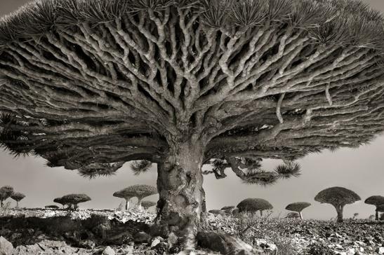 """""""Lo bello del desierto es que en algún lugar esconde un pozo."""" (ASE, El Principito). Fotografía de Beth Moon"""